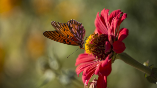 orange butterfly resting atop a pink flower