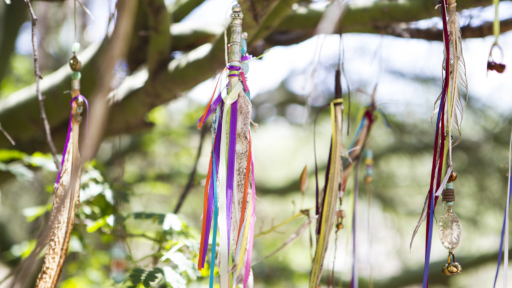 colorful dream catchers hanging from branches in tucson