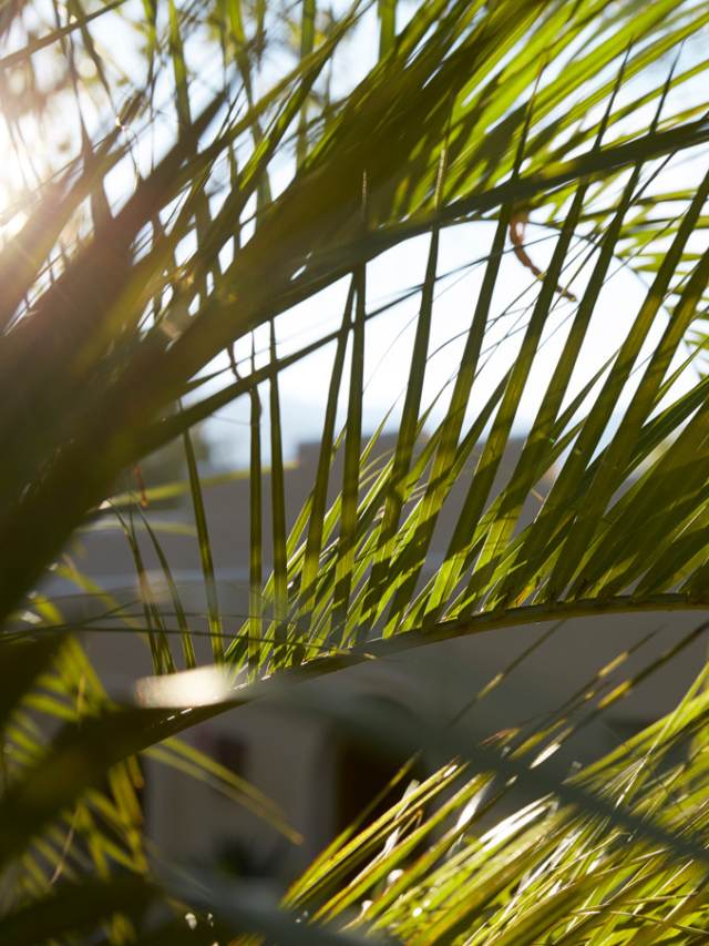sunlight peeks through the palm fronds