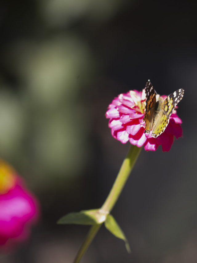 butterfly sitting on a pink flower