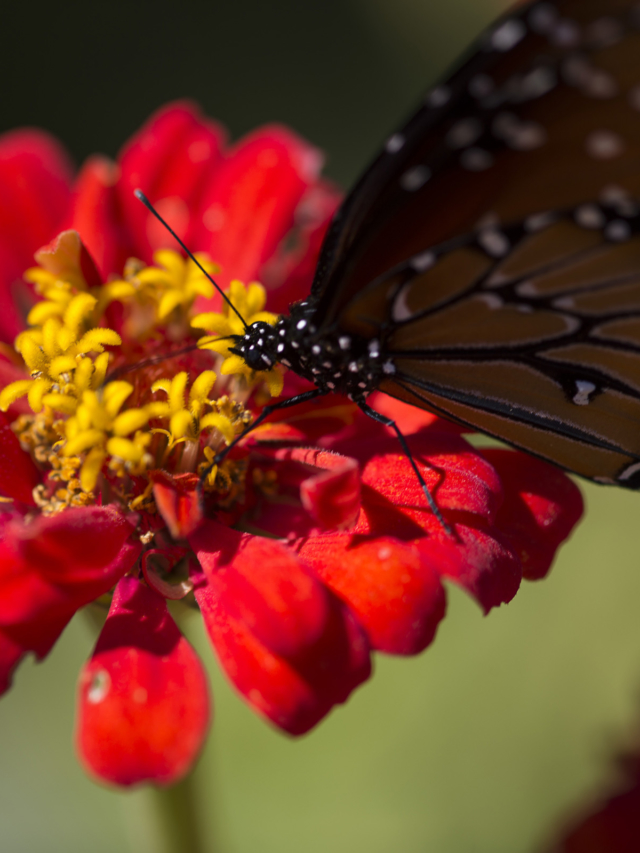 butterfly on a red and yellow flower