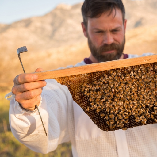 miraval arizona's beekeeper noel looks over honeycombs
