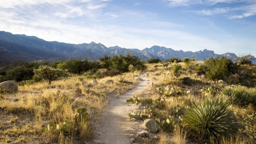 desert trail overlooking the santa catalina mountains
